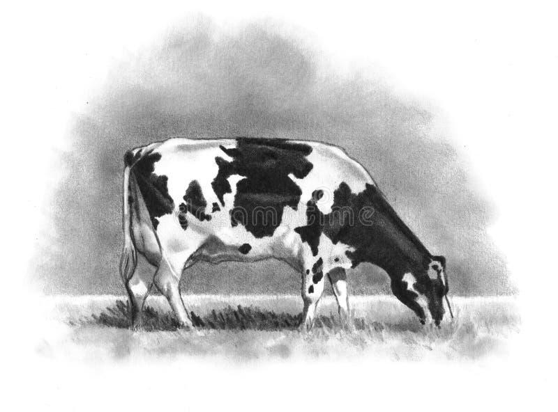 吃草黑白花牛铅笔的母牛图画 皇族释放例证