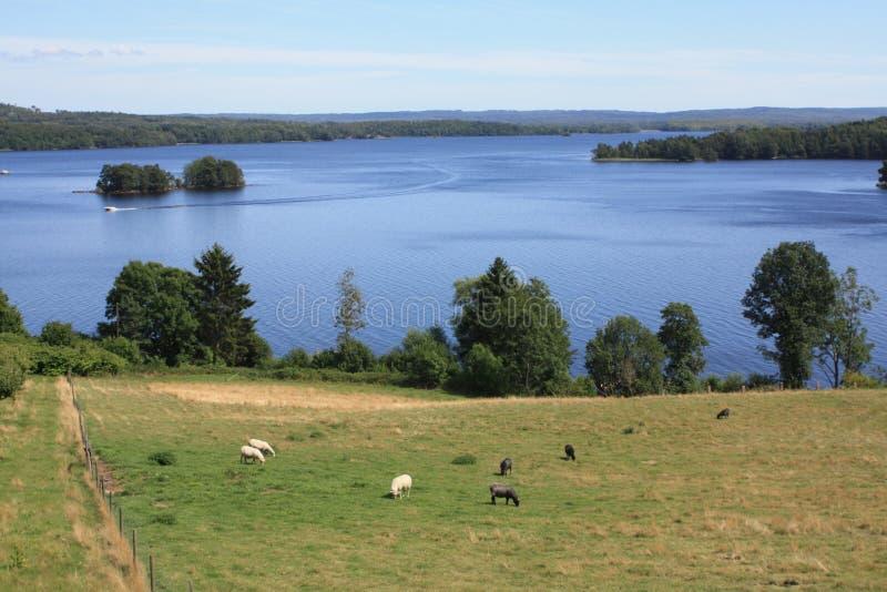 吃草ivo湖的吱吱叫声 免版税库存图片