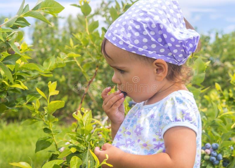 吃莓果的可爱的小女孩 免版税图库摄影
