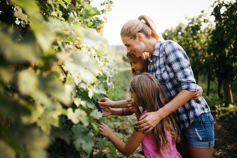 吃葡萄的年轻愉快的女孩在葡萄园里 库存照片
