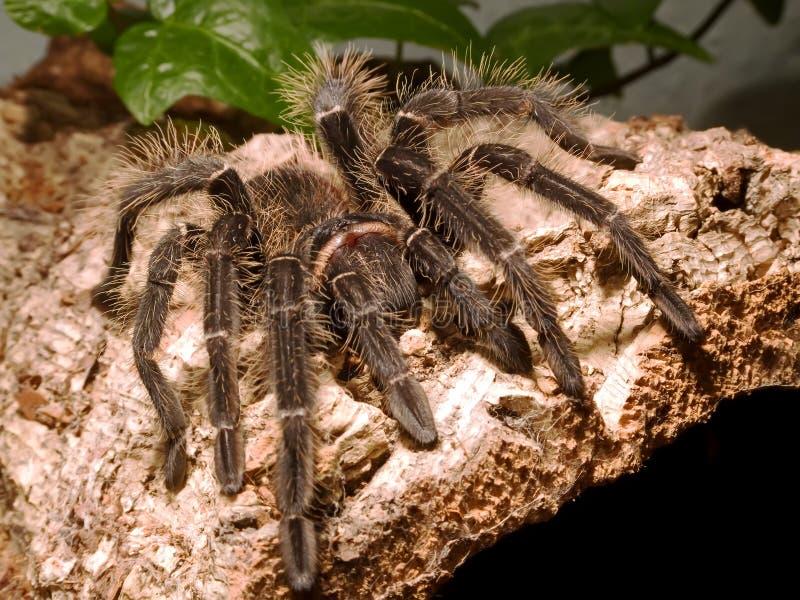 吃蜘蛛的鸟 免版税库存照片