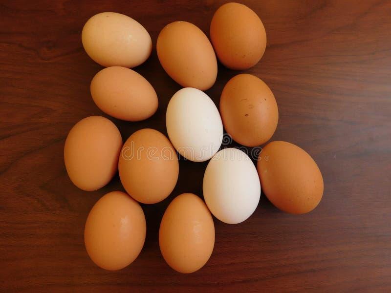 吃鸡蛋 免版税库存照片