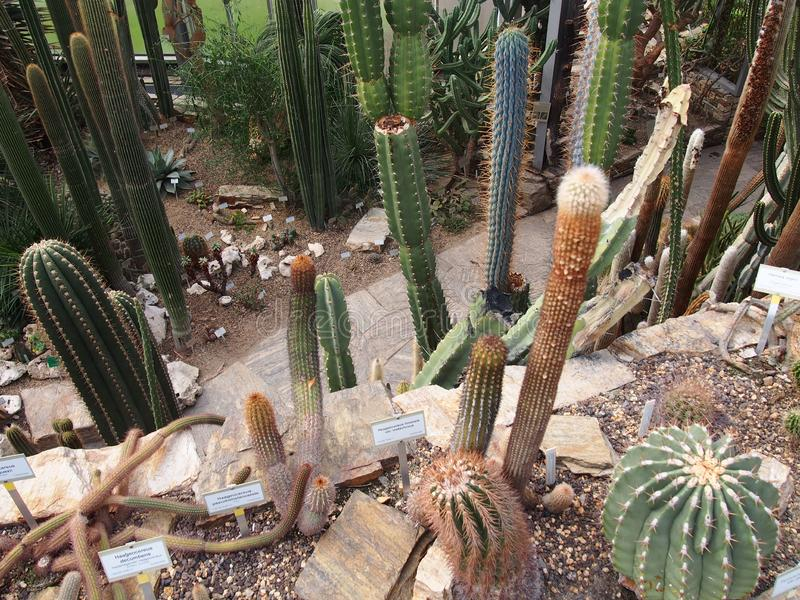 各种各样仙人掌狐尾龙舌兰,印度figl等等,柏林dahlem植物园 库存照片