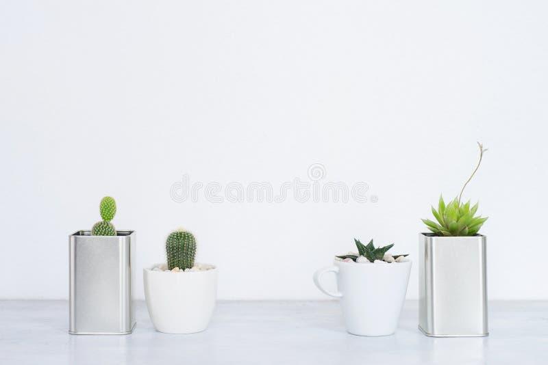 各种各样的仙人掌和多汁植物的汇集我 免版税图库摄影