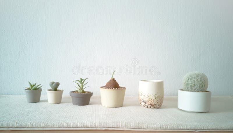 各种各样的仙人掌和多汁植物的汇集用不同的罐 房子植物装饰-图象 免版税库存照片
