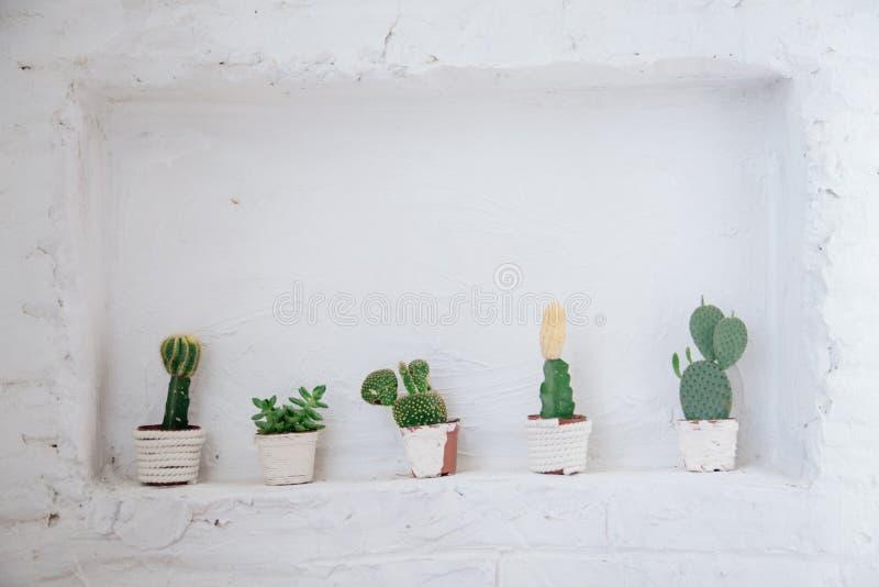各种各样的仙人掌和多汁植物的汇集用不同的罐 白色架子的盆的仙人掌房子植物对白色墙壁 免版税库存照片