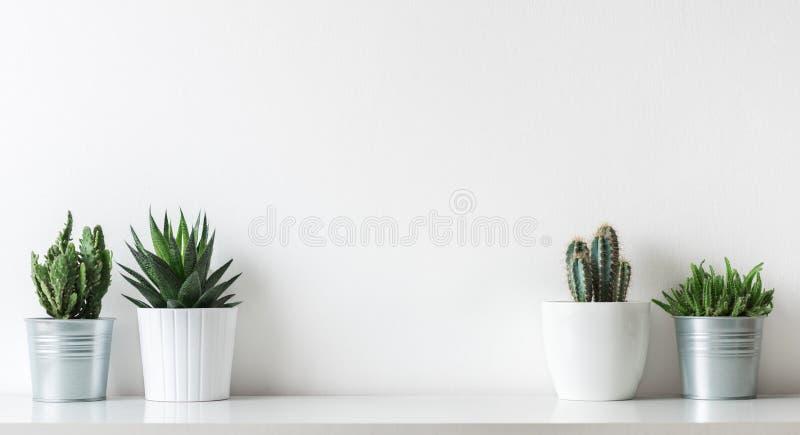 各种各样的仙人掌和多汁植物的汇集用不同的罐 白色架子的盆的仙人掌房子植物 库存照片