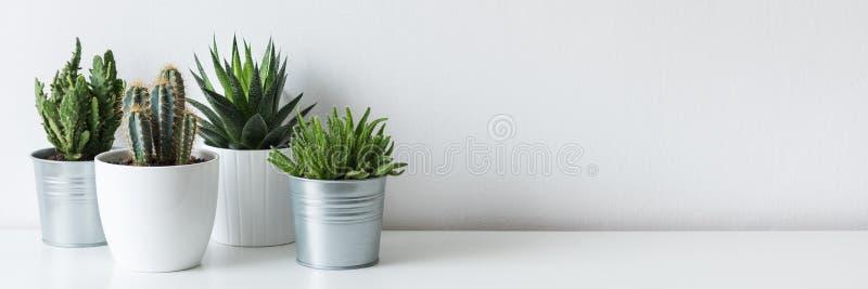 各种各样的仙人掌和多汁植物的汇集用不同的罐 白色架子的盆的仙人掌房子植物 库存图片