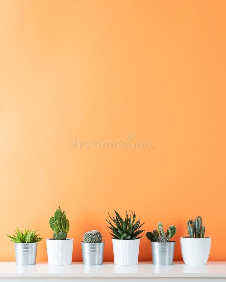 各种各样的仙人掌和多汁植物的汇集用不同的罐 白色架子的盆的仙人掌房子植物 免版税库存图片
