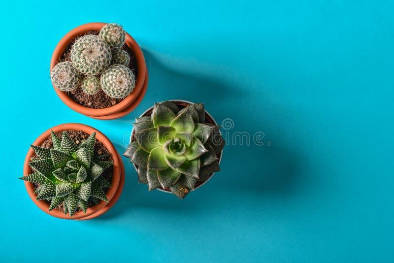 各种各样的仙人掌和多汁植物的汇集 免版税库存照片