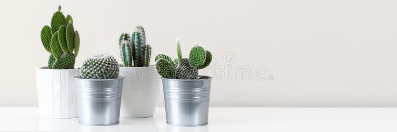 各种各样的仙人掌房子植物用不同的罐对白色墙壁 与拷贝空间的横幅 免版税库存照片