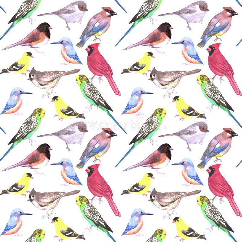 各种各样的在白色的鸟无缝的水彩背景budgie主教金翅雀北美山雀翠鸟黄连雀碛 库存例证