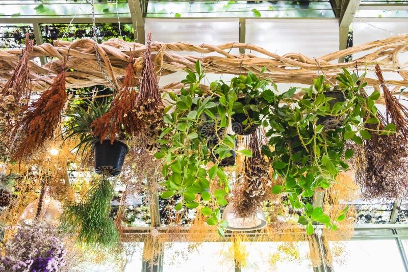 各种各样的垂悬在藤的植物和干燥花 库存照片