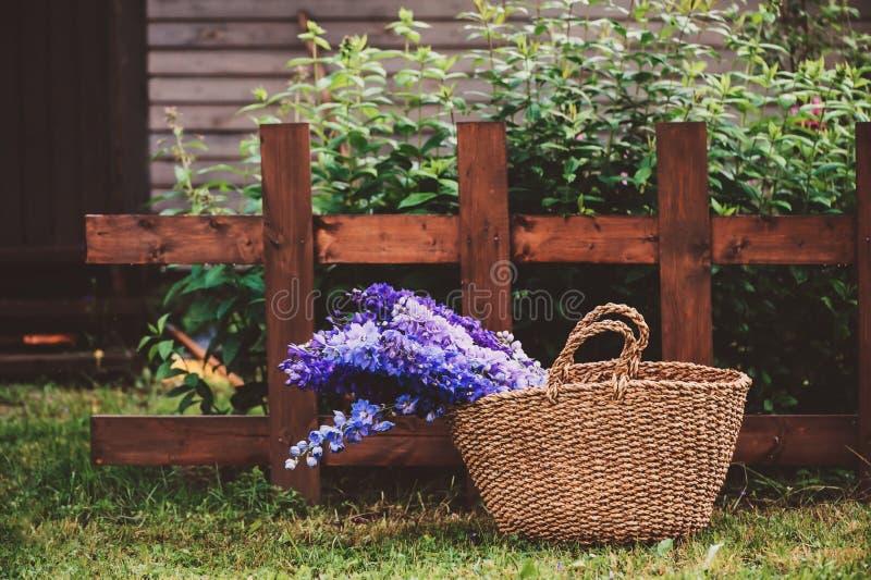 各种各样的多色的翠雀花束在篮子的在夏天庭院里 免版税库存图片