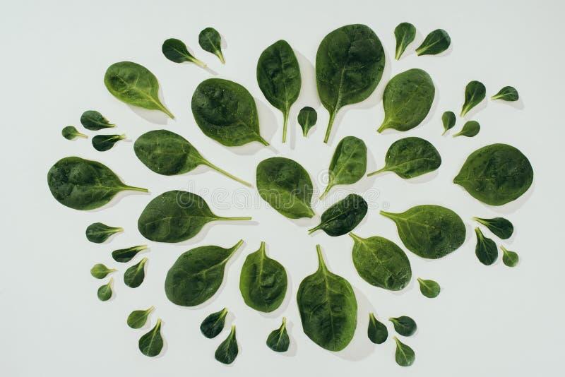 各种各样的大小美丽的新鲜的绿色菠菜叶子顶视图  免版税库存照片