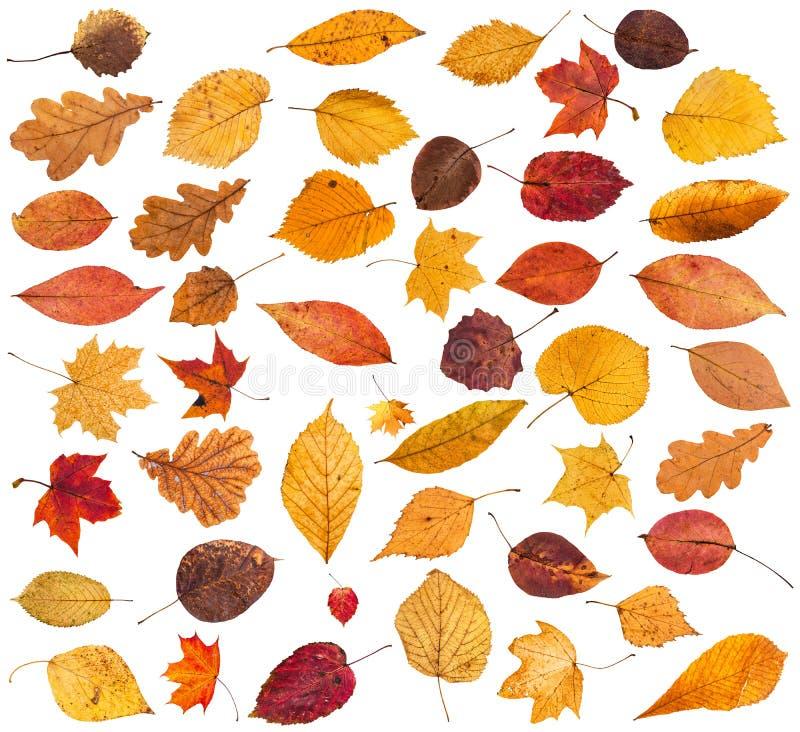 各种各样的干秋天下落的叶子的汇集 免版税库存图片