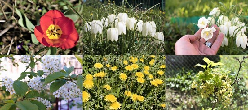 各种各样的庭院花的安排在一个土气庭院里 图库摄影