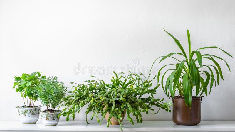 各种各样的房子植物用不同的罐对白色墙壁 室内盆的植物背景 现代室装饰 库存照片