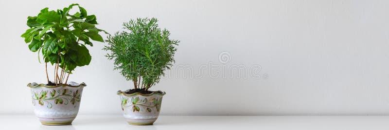 各种各样的房子植物用不同的罐对白色墙壁 室内盆的植物背景 现代室装饰 免版税库存图片