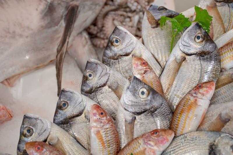 各种各样的新鲜的在桌上显示的海鲜和鱼待售在一个鱼市上在巴里,意大利 库存照片