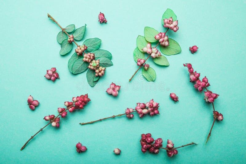 各种各样的森林草、红色莓果和叶子在绿色背景 免版税库存照片