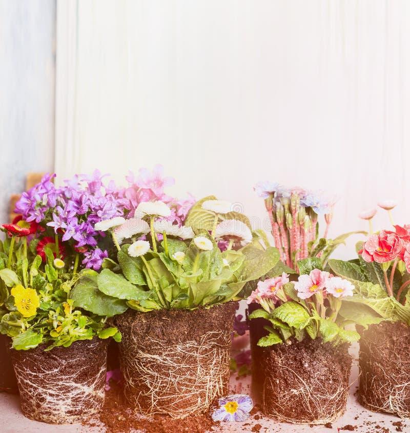各种各样的植物和花装壶的 庭院或阳台花 库存照片