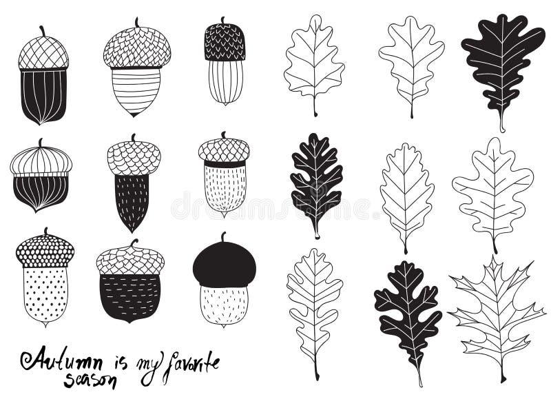 各种各样的橡子和叶子的汇集 库存例证