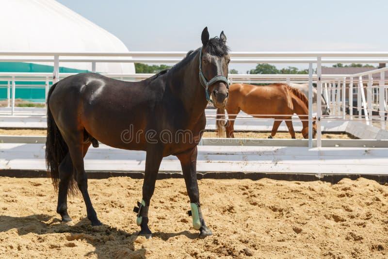 各种各样的油漆马在分开的畜栏停留 免版税库存照片