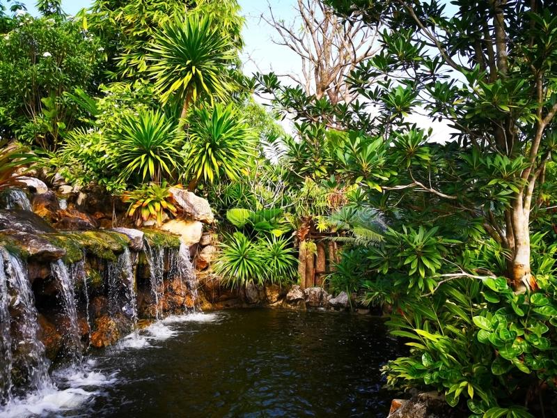 各种各样的灌木围拢的小瀑布,是 免版税图库摄影