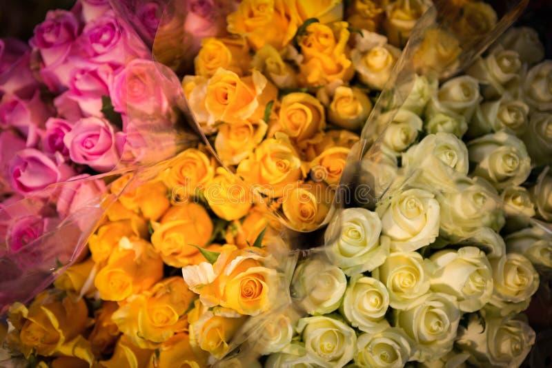 各种各样的玫瑰特写镜头  库存照片
