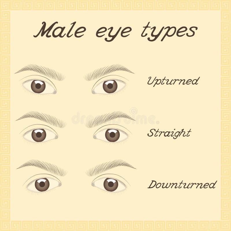 各种各样的男性眼睛类型 库存例证