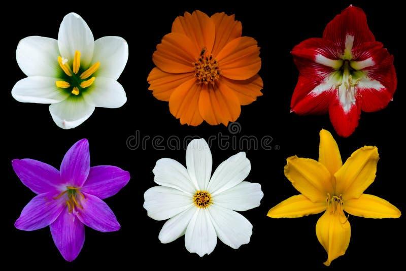 各种各样的白色波斯菊和雨百合、桃红色雨百合、橙色波斯菊、红色hippeastrum孤挺花和黄色黄花菜花 免版税库存图片