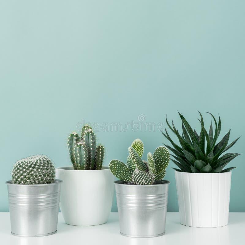 各种各样的盆的仙人掌和多汁植物的汇集白色架子的反对淡色绿松石上色了墙壁 议院植物 库存照片