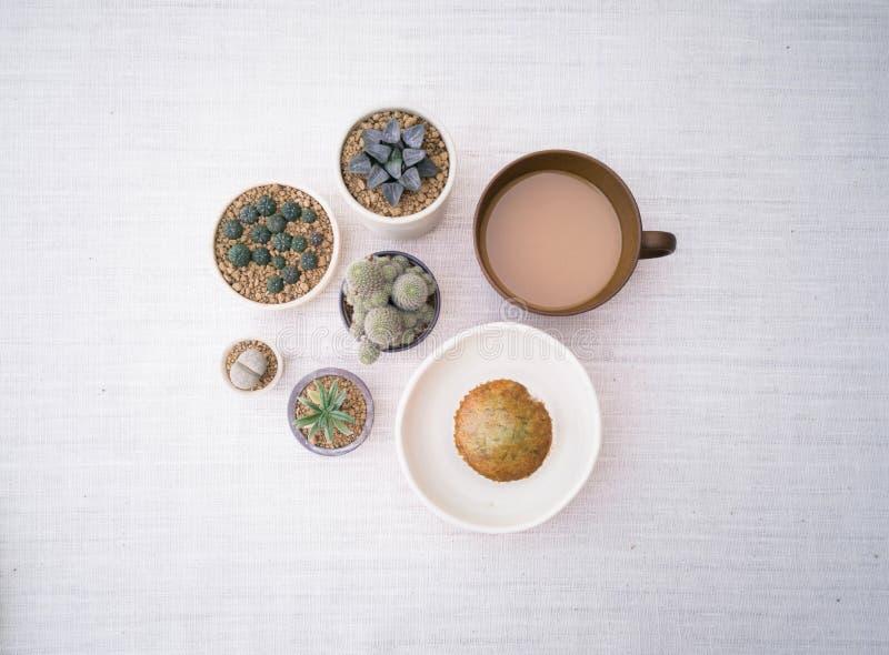 各种各样的盆的仙人掌房子植物的汇集,与一杯咖啡的杯形蛋糕,顶视图 库存照片