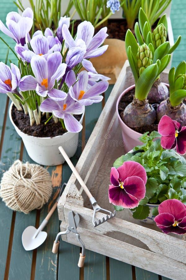 各种各样的盆的春天花 免版税图库摄影
