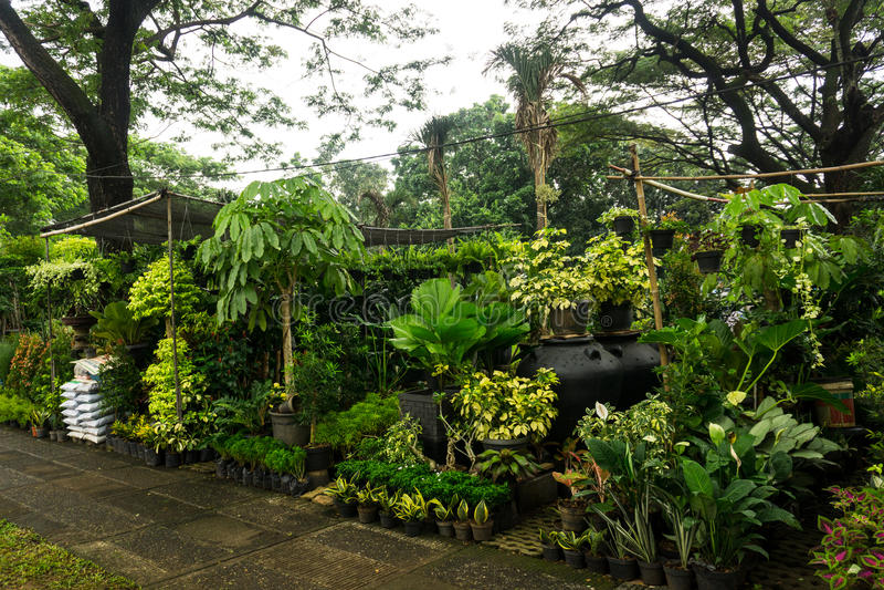 各种各样的种类植物,花和肥料由在雅加达拍的卖花人照片卖印度尼西亚 免版税图库摄影
