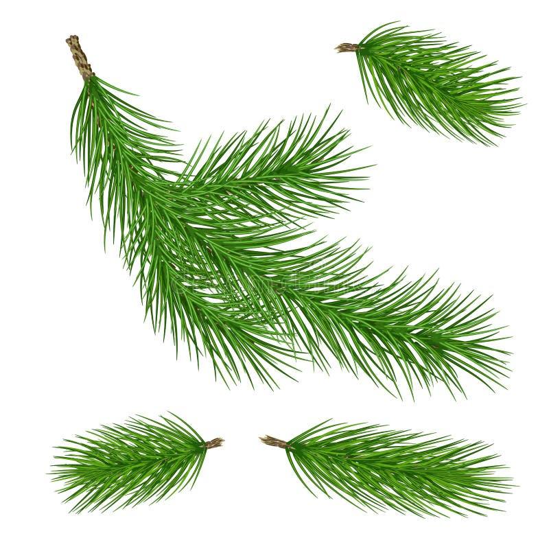 各种各样的绿色杉木分支 特写镜头 集合 隔绝,不用sha 库存例证