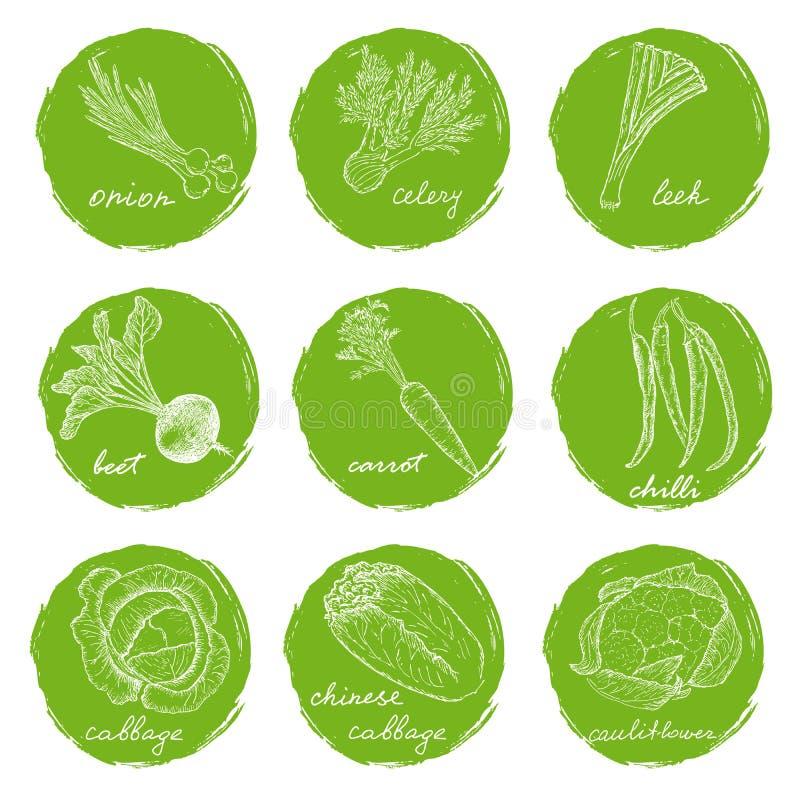 各种各样的菜剪影  向量例证