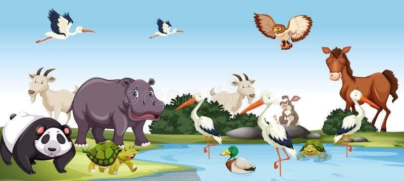各种各样的野生动物场面 向量例证