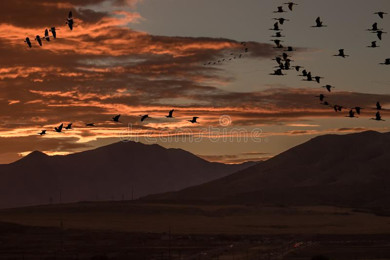 各种各样的鸟剪影在日落期间的迁移时 库存图片
