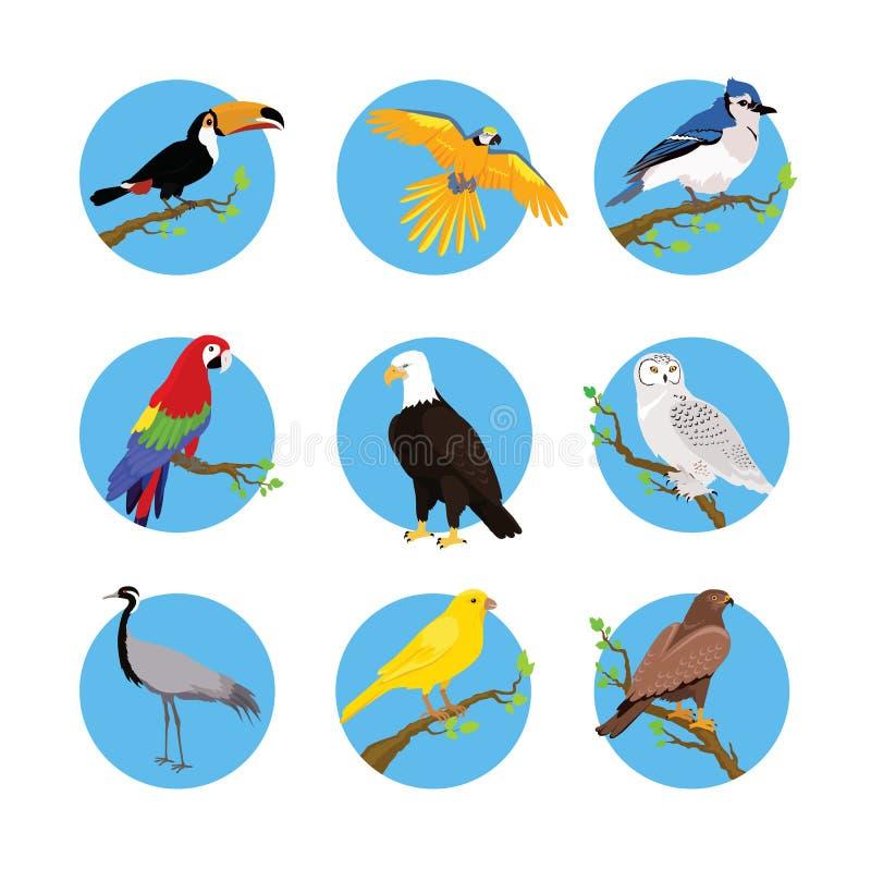 各种各样的鸟平的设计的汇集 皇族释放例证