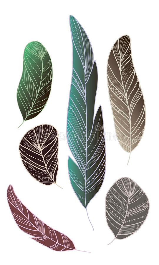 各种各样的鸟羽毛  免版税库存照片