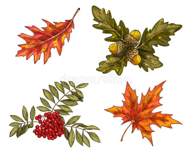 各种各样的绿色和橙色在白色背景隔绝的秋叶和成长 也corel凹道例证向量 库存例证