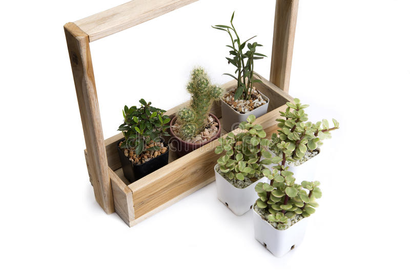 各种各样仙人掌和小植物 免版税库存图片