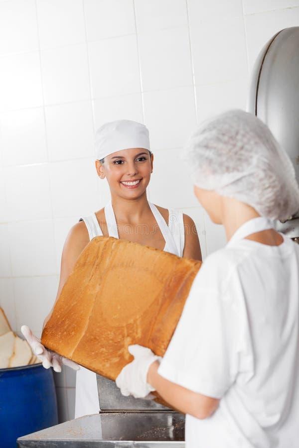 结合在一起使大面包大面包的贝克和工友 库存照片