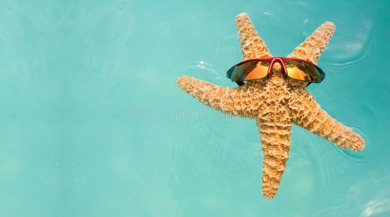 合并海星游泳假期 免版税库存图片
