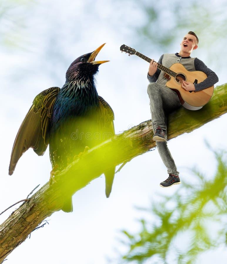 吉他演奏员和椋鸟唱歌 免版税图库摄影