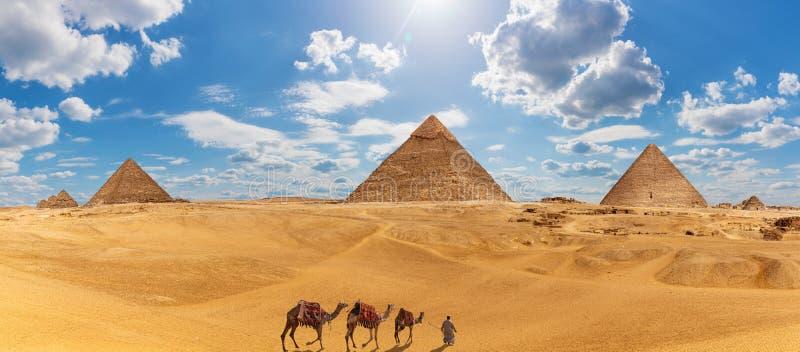 吉萨棉全景有金字塔、骆驼和流浪者的 免版税库存照片