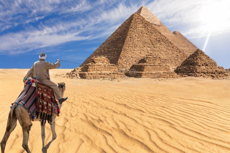 吉萨棉沙漠,埃及的流浪者在伟大的金字塔前面的 免版税库存照片