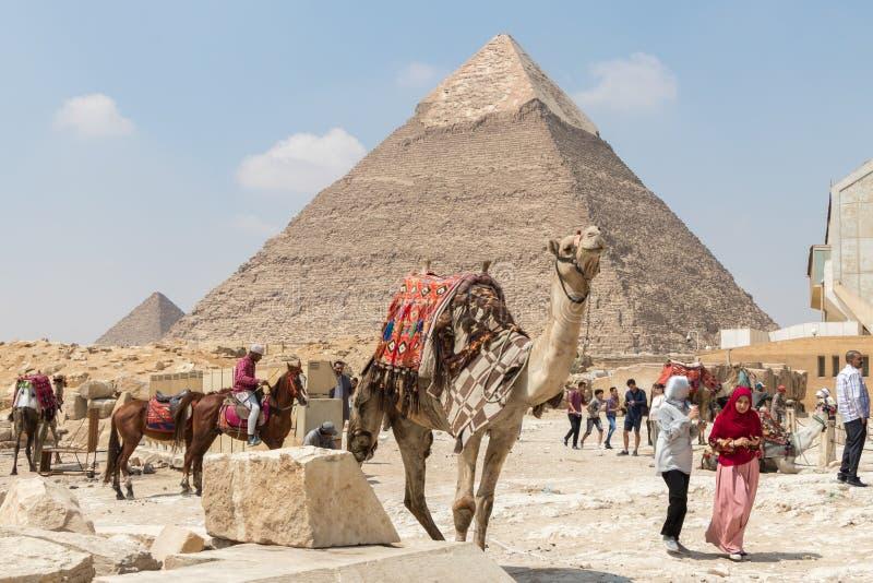 吉萨棉,埃及- 2019年4月19日:装饰的骆驼等待在卡夫拉金字塔,埃及前面的一位乘客 免版税库存照片
